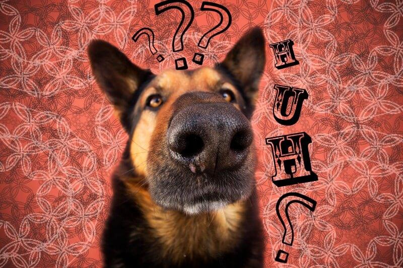 ペット保険に疑問をもつ犬