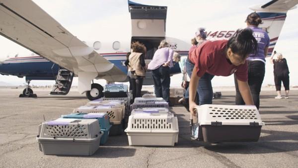 飛行機から動物達の入っている籠を降ろしてる作業風景