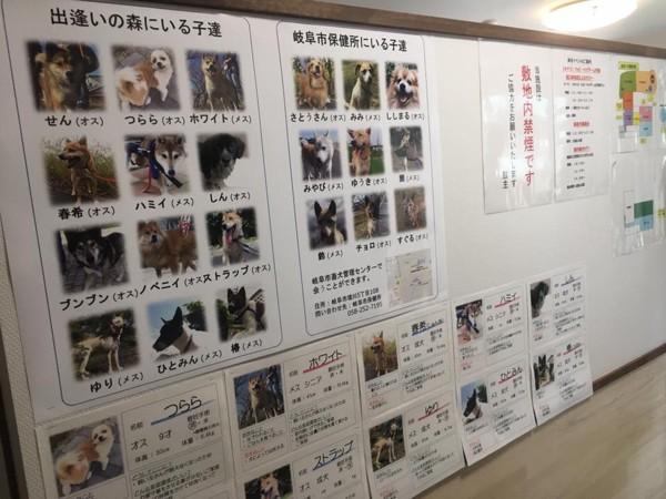 この施設にいる犬と保健所にいる犬の両方の里親探しが行われています。