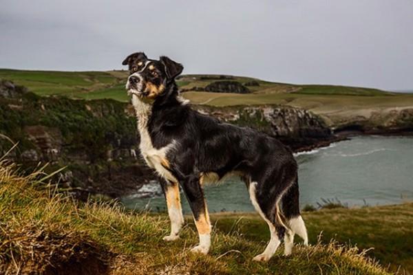 海の近くの崖にいる黒と白の犬