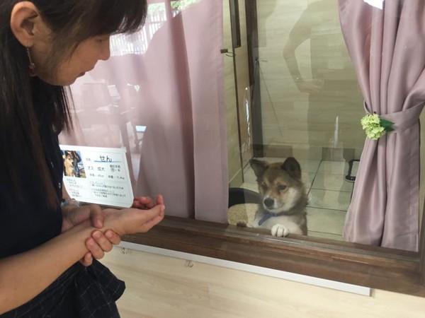 保護犬たちの部屋
