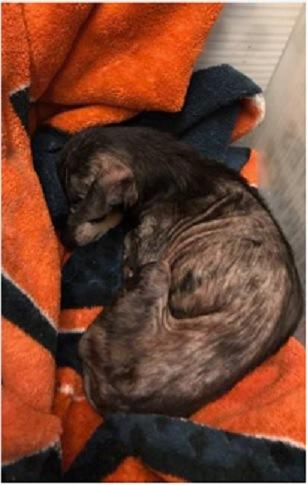 救出された犬