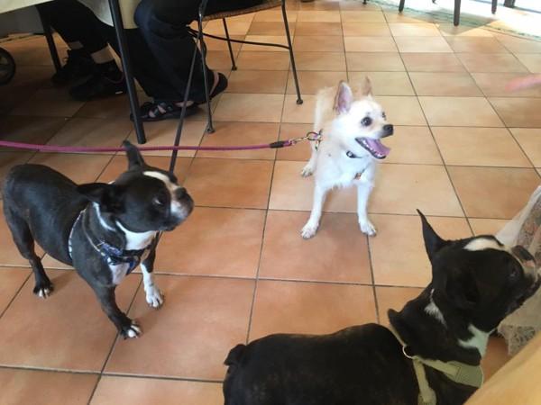 施設を訪れた犬達