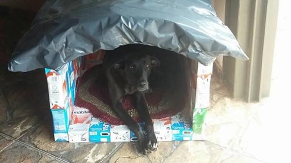 牛乳パックの犬小屋と犬