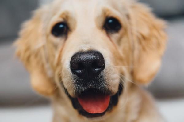 正面を向く犬