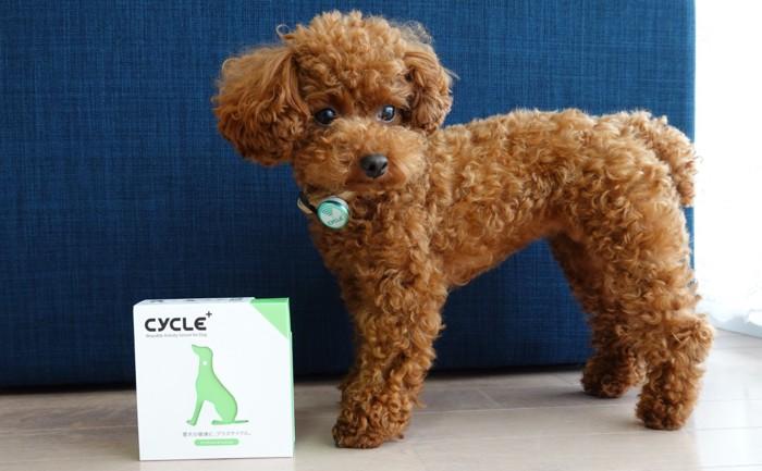 愛犬とPlus Cycle箱