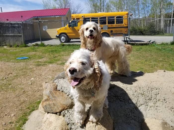 2匹の犬達