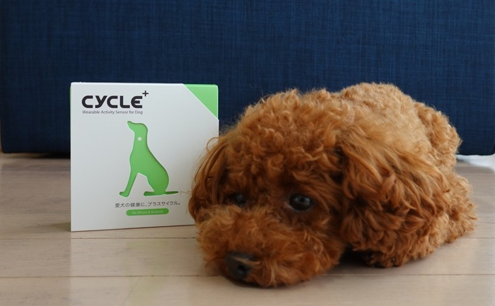 Plus Cycle箱と寝そべる愛犬