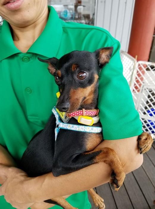 多頭飼育から救い出された犬