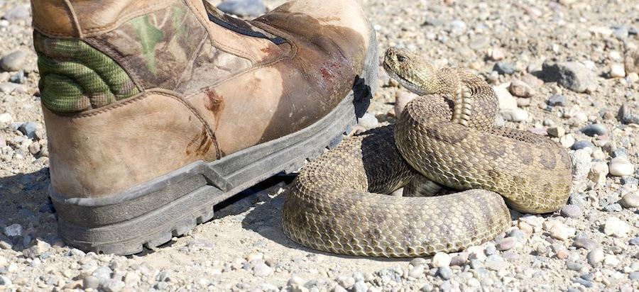 ガラガラ蛇と足