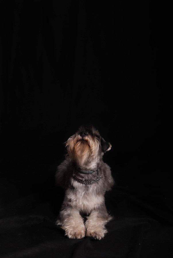 暗い場所にひっそりと佇む犬