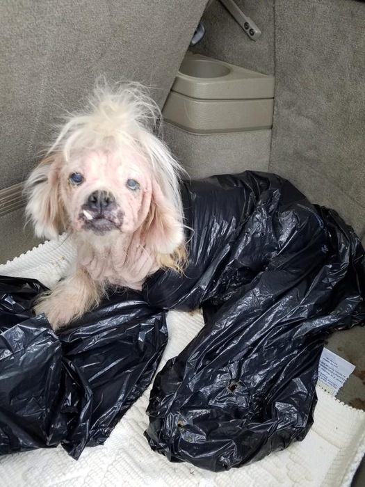 ゴミ袋に入れて捨てられた犬