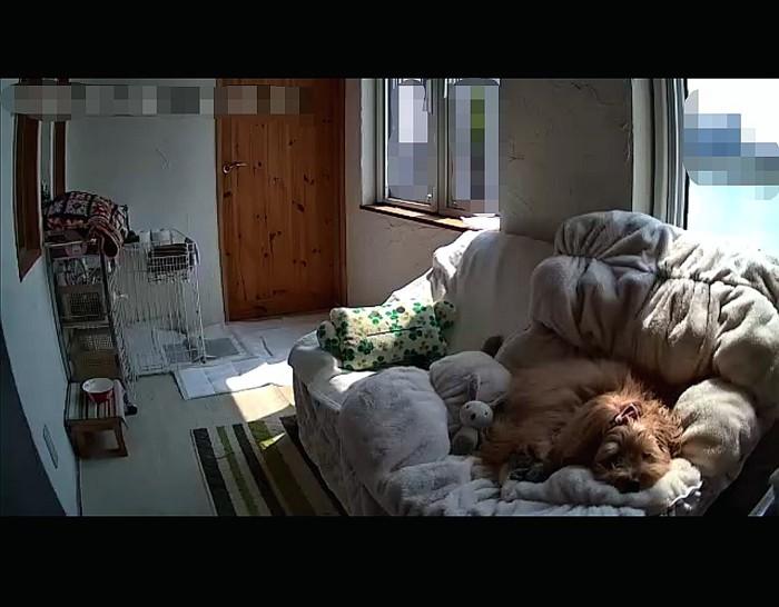 ねんねしている愛犬の写真
