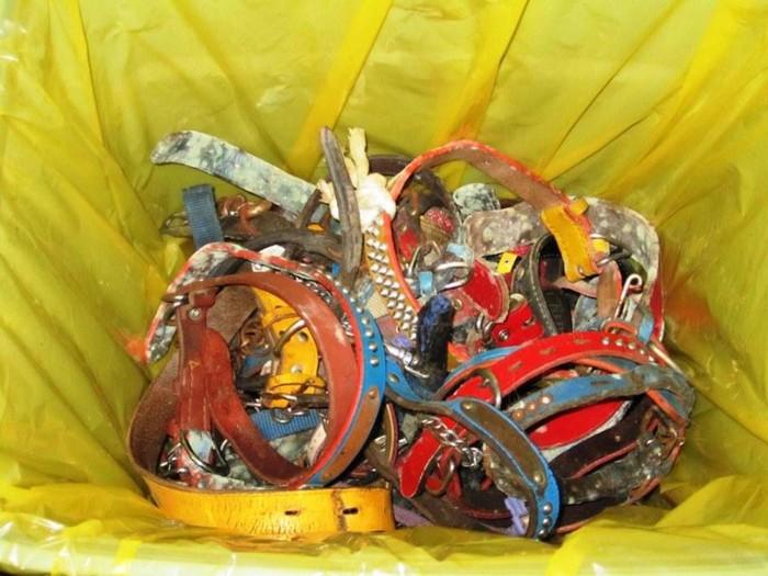 ゴミ袋に入れられた首輪