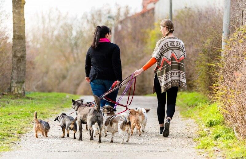 複数の犬をまとめてお散歩中