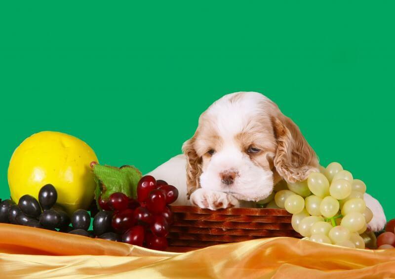 ぶどうに囲まれている犬