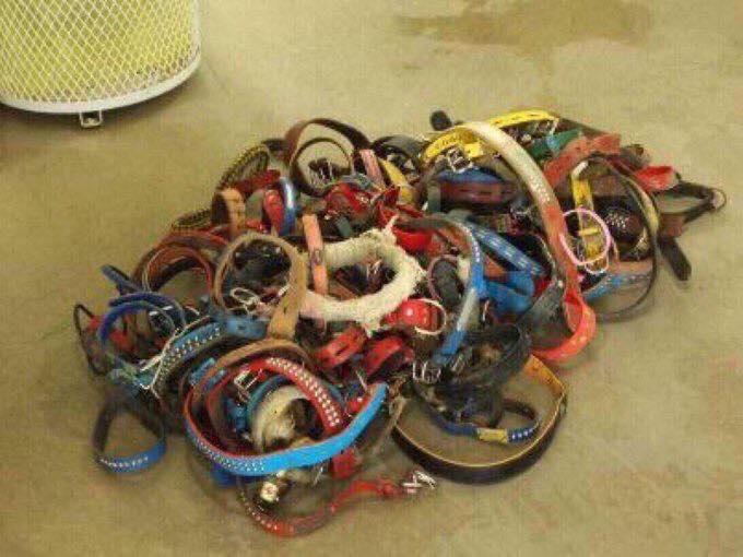 床に置かれた首輪たち