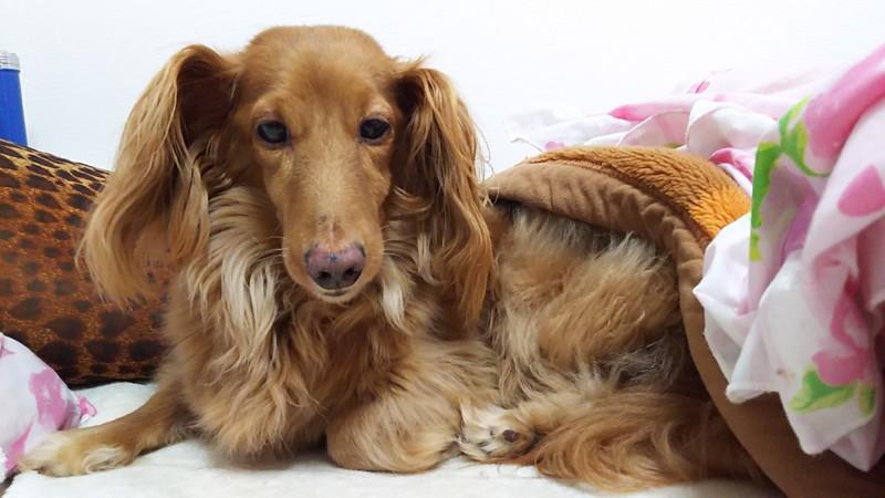 保護犬という存在を知った日-やっと出会えたかけがえのない家族 | わんちゃんホンポ
