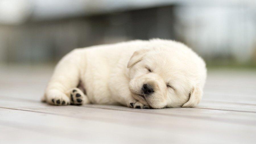 寝 時に 犬 痙攣 てる