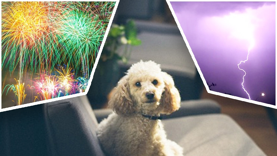 8月は犬の迷子が急増!花火や雷から愛犬を守ろう! | わんちゃんホンポ