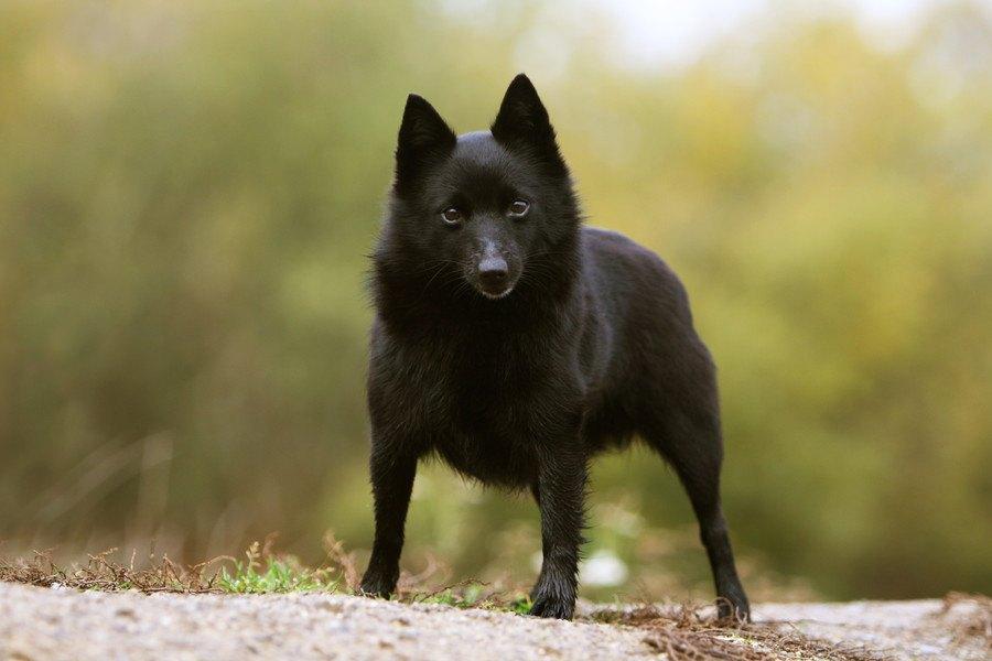 黒い 犬 名前 和風